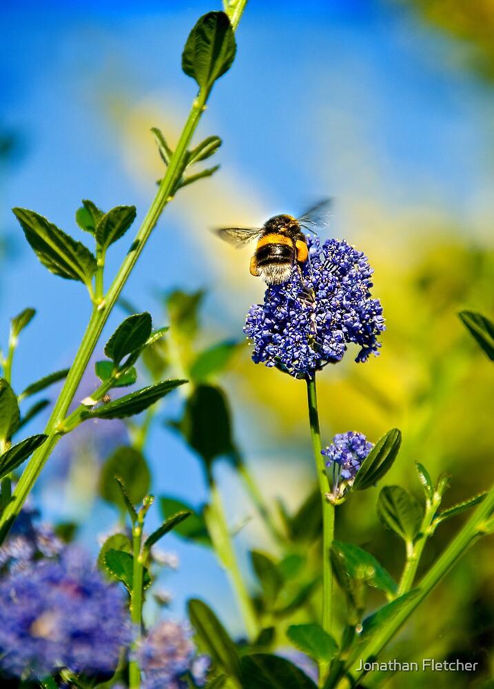 Worker Bee, Staffordshire, Midlands, UK. by Fletch147
