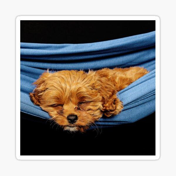 Remi sleeping Sticker