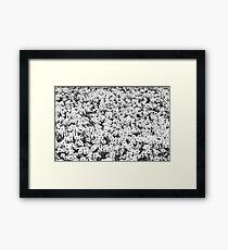 Taraxacum, Dandelion Framed Print