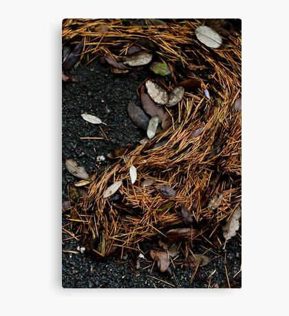 Composition Canvas Print