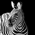 Zebra by Belinda Fletcher