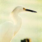 Snowy Egret by Jonicool