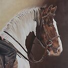 The Appy Cob by Pauline Sharp