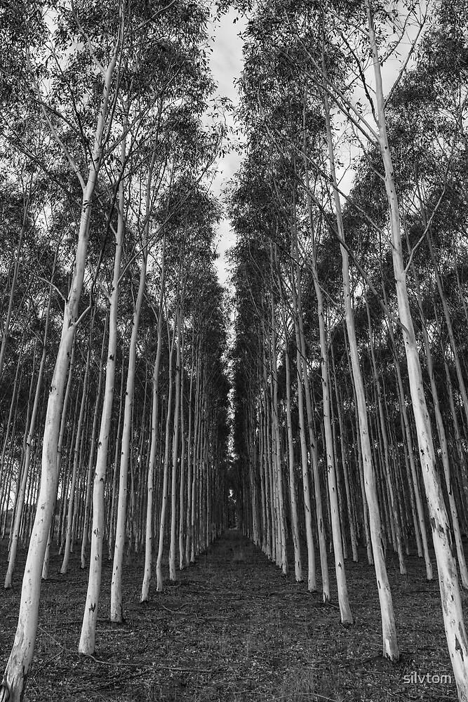 Bäume von Silvia Tomarchio