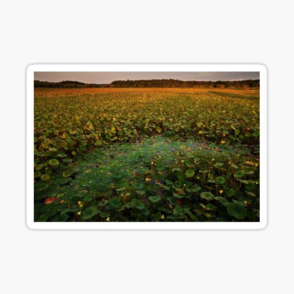 September's Full Lotus landscape Sticker