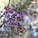 Spring time - Sacura by agnessa38