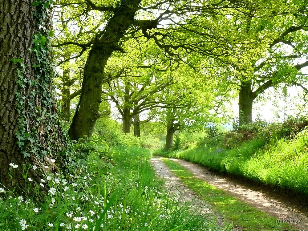A Green Way by mikebov