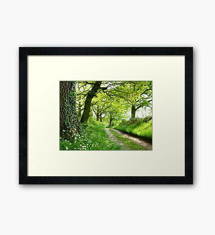 A Green Way Framed Print