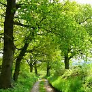 A Green Haven by mikebov