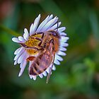 Another Bee by Pauline Tims