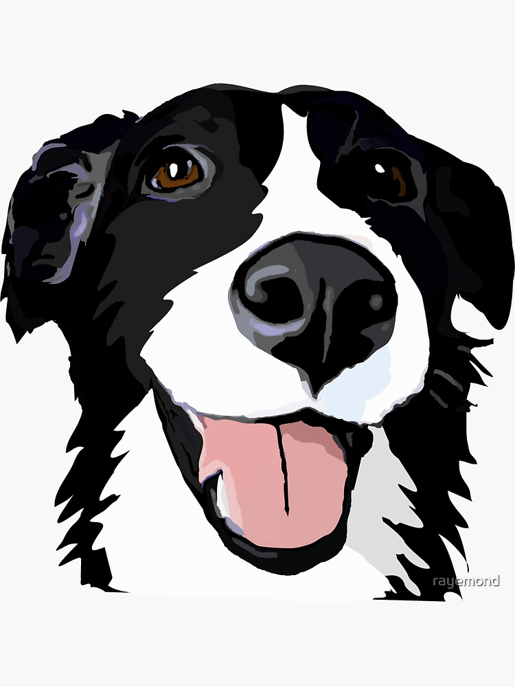 Smiley collie de rayemond