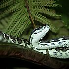 Jungle python in the rain by AnnaKT
