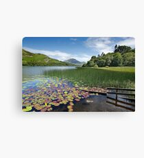 Loweswater Lake shore in summer from Holme Wood English Lake District Canvas Print