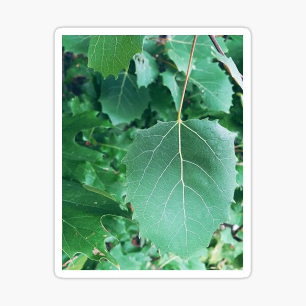 Simple Beauty in Boothbay: Leaves Sticker