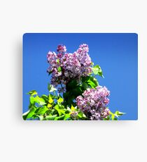 Lilac And Blue Canvas Print