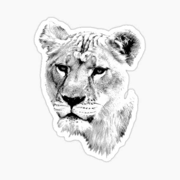 Lion Images Stickers Redbubble