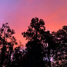Pretty orange/red sunset  by Mariam Kabbout