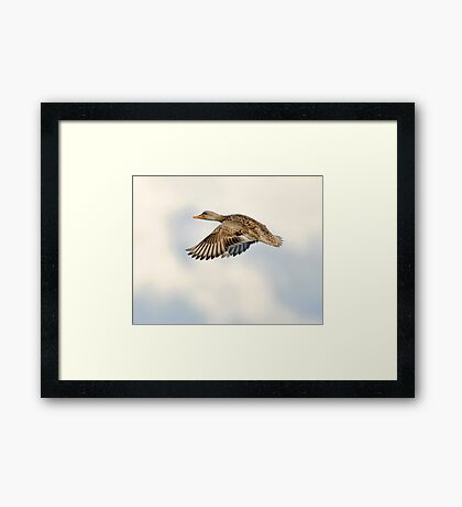 Sweet and Smooth Framed Print