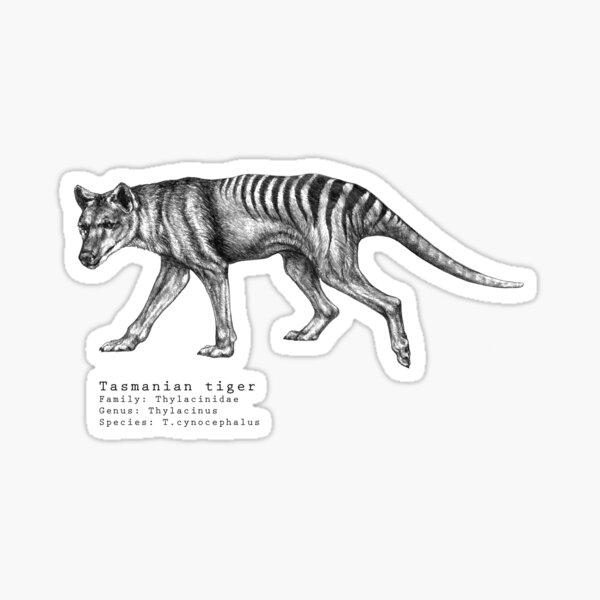 Tasmanian tiger  Sticker