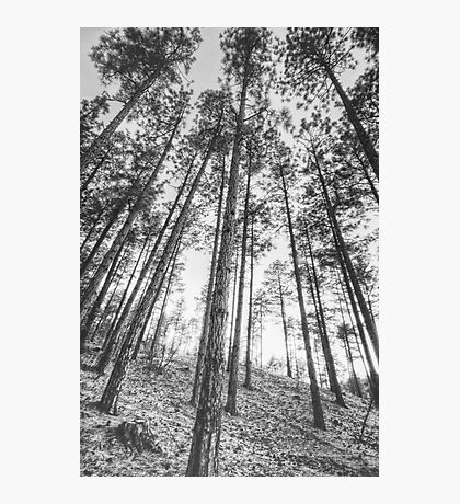 Tall and Skinny Photographic Print