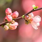 «pink flower on tree in spring» de spetenfia