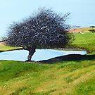 Downland Dew Pond  by Paula Oakley