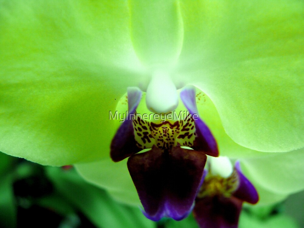#277    Green Orchid by MyInnereyeMike