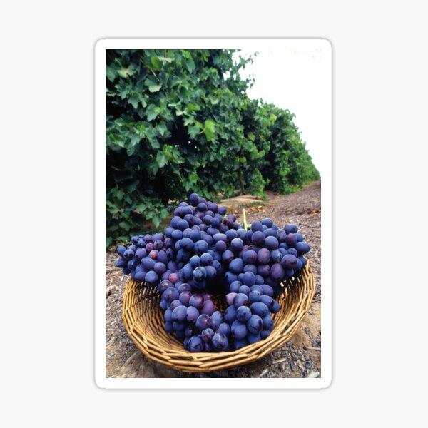 Grape Vineyard  Sticker