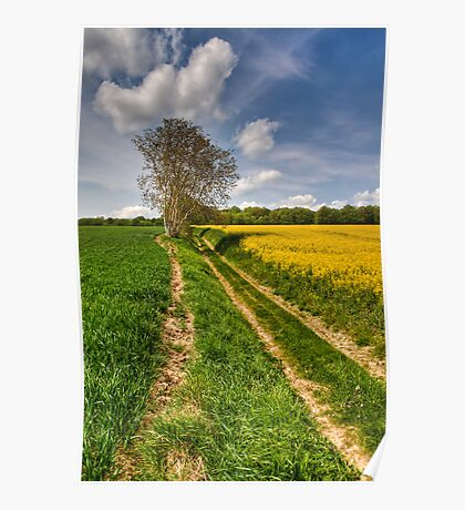 Tree in the fields Poster