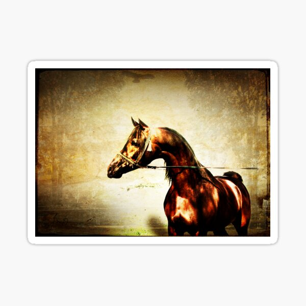 Bay Arabian Stallion Sticker