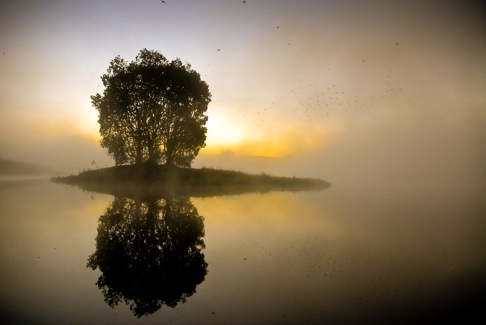 The Roosting Tree by Keith Rowell