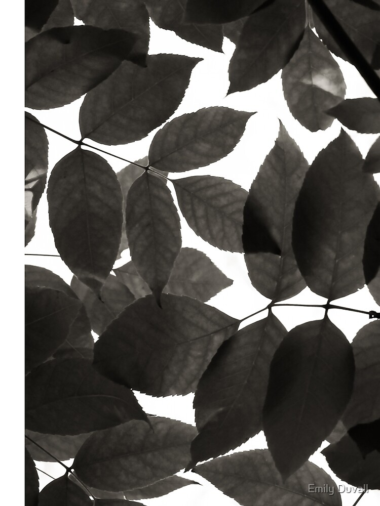 Black and White Natural Patterns by PeaceAndBeauty