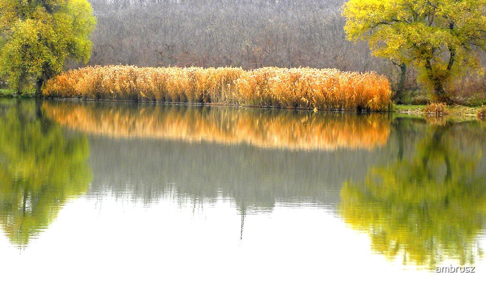 Reflection on the water,lake at town Fot,Hungary,Central Europe by ambrusz