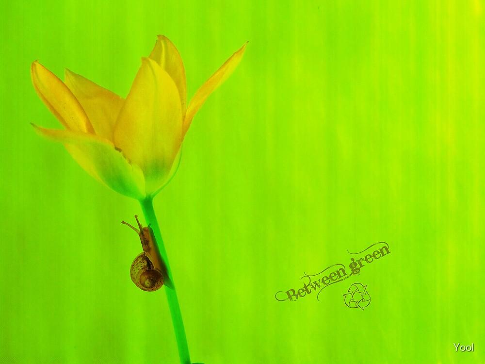 Between green by Yool