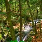 Honey Hollow Falls by Mandy Wiltse