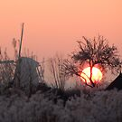 Frozen Sun by ferryvn