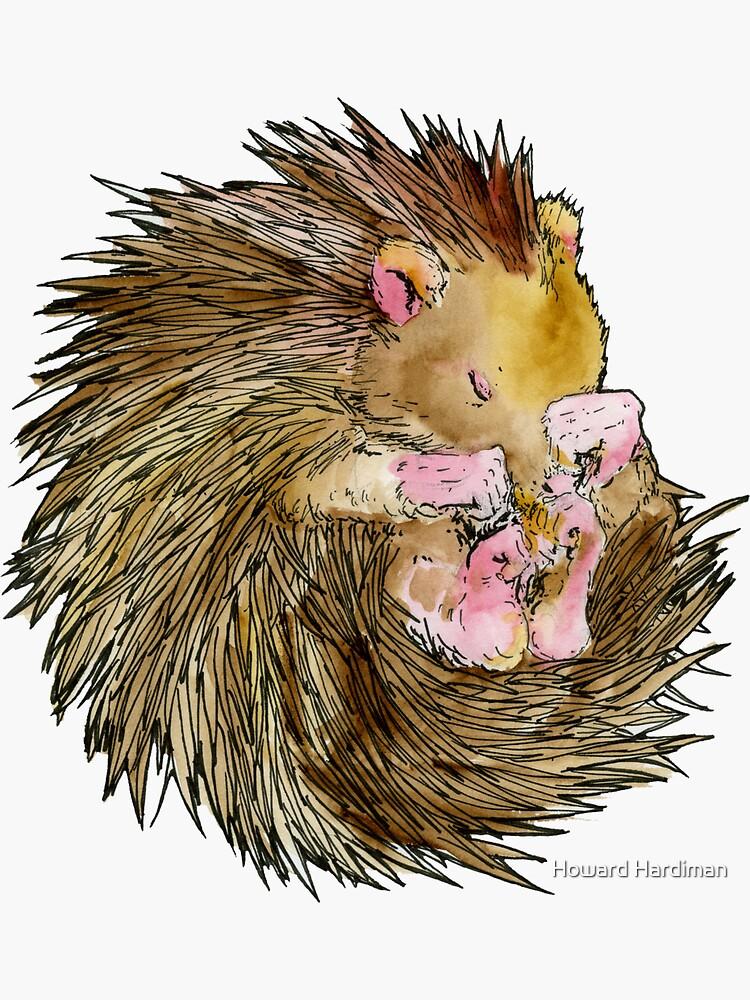 Sophie the Sleepy Hedgehog by hardiman