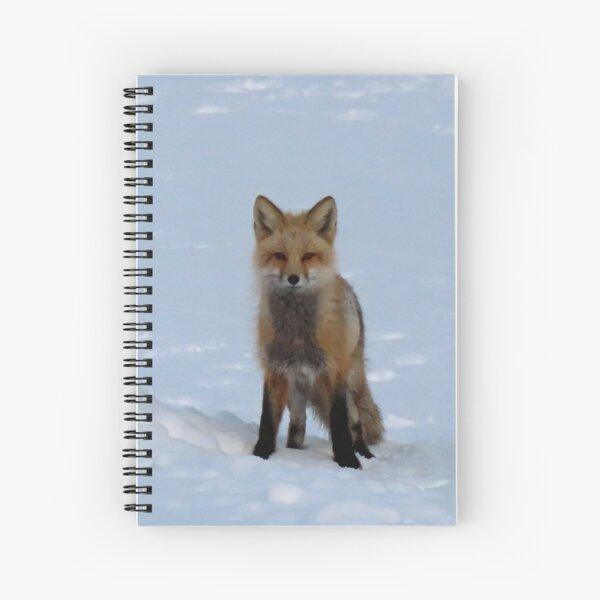 Colorado Red Fox in Spring Snow,ellanbethia, photography Spiral Notebook