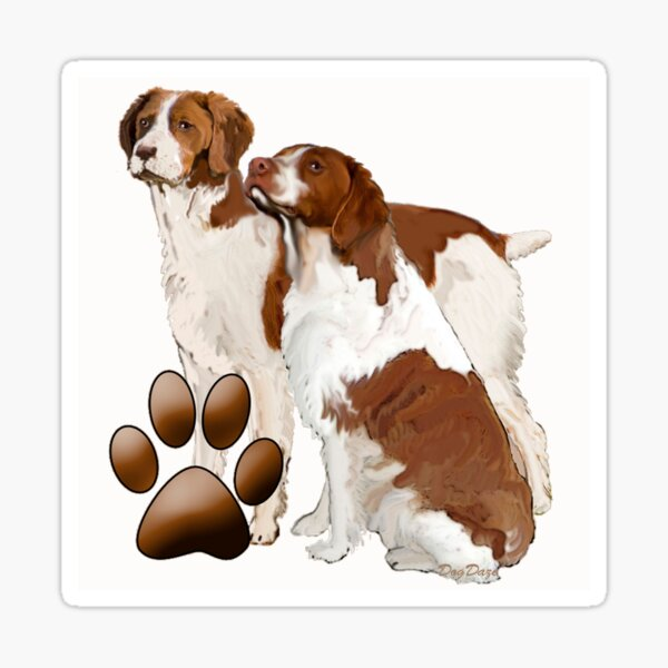 Two Brittany Spaniels Sticker