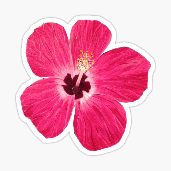 Pink Hibiscus  Sticker