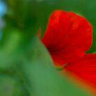 Red pettles like wings by drackar