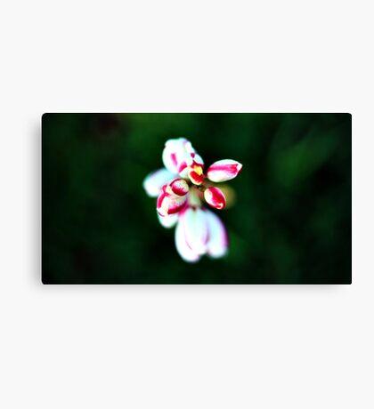 Petal Pearls Canvas Print