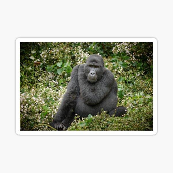 mountain gorilla, Uganda Sticker