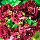 Rose Lipstick by Nancy Stafford