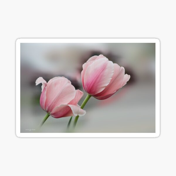 Twin Pinks Sticker