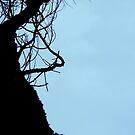 scary tree silhouette by elizabethrose05