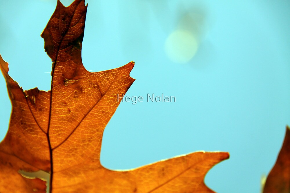 Ready to fall by Hege Nolan