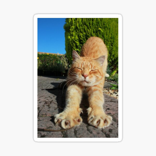 Ginger cat stretching on garden path Sticker