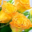 Roses in May by Viktoryia Vinnikava