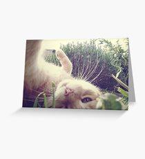 _ playful _ Greeting Card